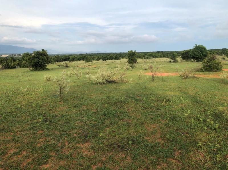 Ảnh của Bán lô đất vườn ngay khu dân đang trồng thanh long, gần đường dự phóng, sổ đỏ sẵn