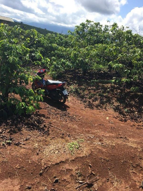 Ảnh của Bán gấp 1.5 ha đất vườn cafe huyện di linh, lâm đồng.