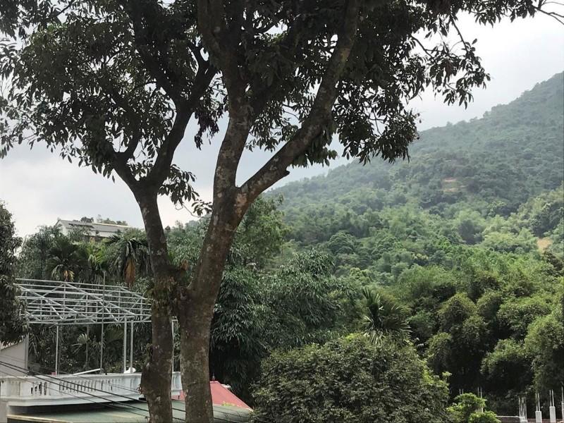 Ảnh của Đất nghỉ dưỡng tại phú mãn quốc oai view núi đồi thơ mộng với thiên nhiên