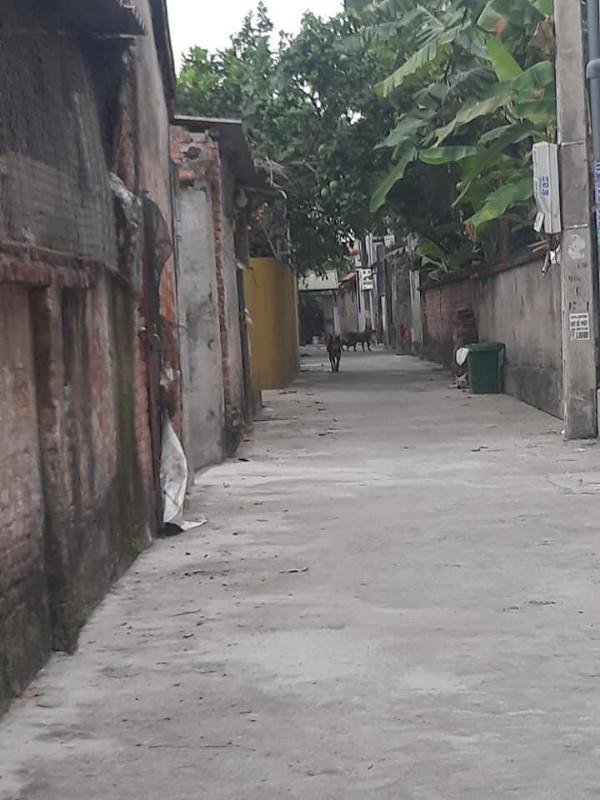 Picture of Cần tiền xây nhà bán bớt mảnh đất tại thị trấn phú xuyên,hà nội. giá chỉ 11,5tr/m2