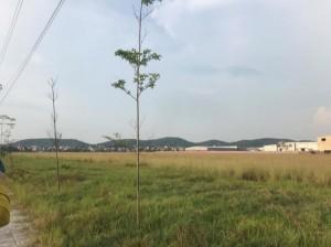 Ảnh của Bán lô đất khu công nghiệp quế võ 2, hạ tầng đã xong, thanh toán linh hoạt.
